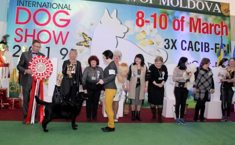 3x INTERNATIONAL & 2x NATIONAL DOG SHOW, MOLDOVA